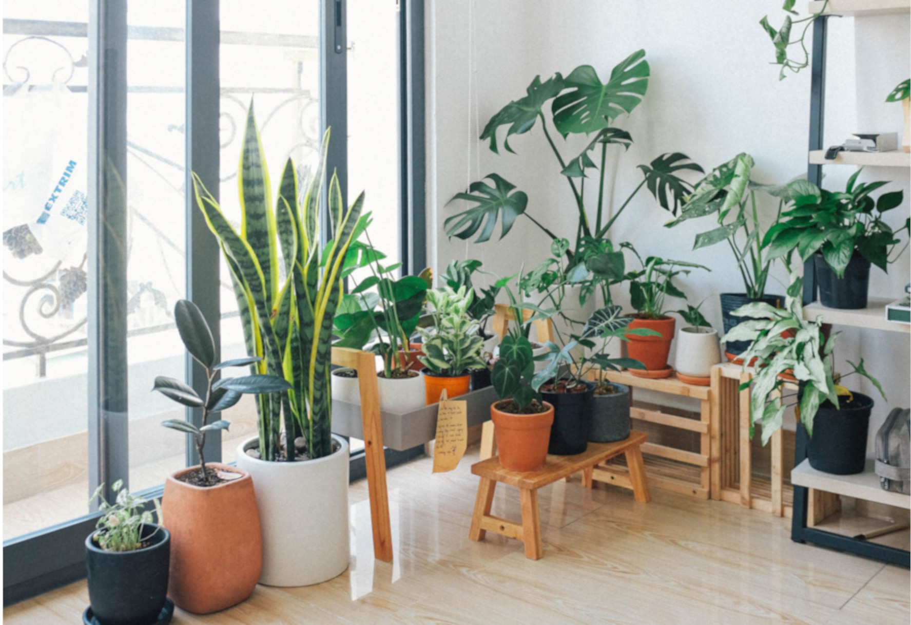 Wie kann man Pflanzen zu Hause aufstellen Verwenden Sie die ...